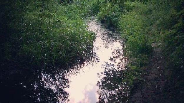 Сырецкий ручей (фото 1)
