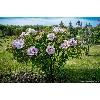 Феофания парк в Киеве фото 3