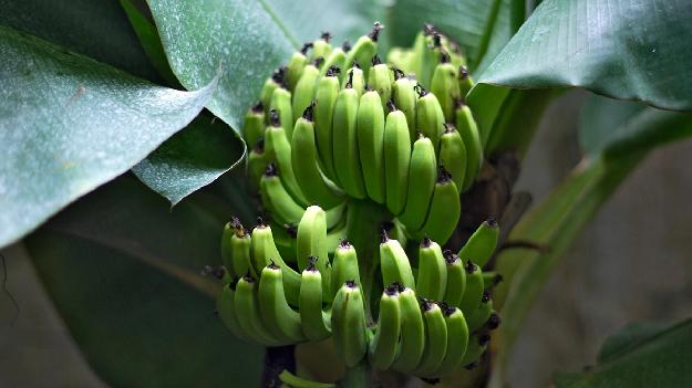 Автобусная экскурсия на банановую ферму