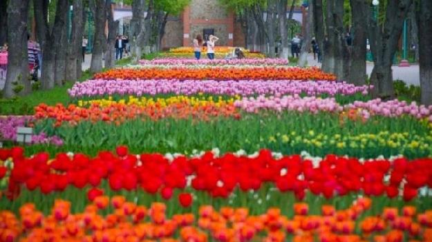 Автобусная экскурсия в Кропивницкий (Кировоград) на тюльпаны